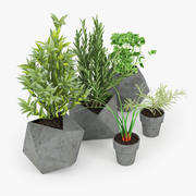 Betonowe rośliny kuchenne 3d model