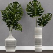花瓶里的龟背竹 3d model