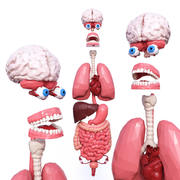 Interne organen Low Poly 3d model