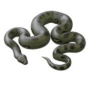 Animated Green Anaconda 3d model