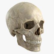 Crâne 3d model