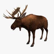 驼鹿游戏准备 3d model