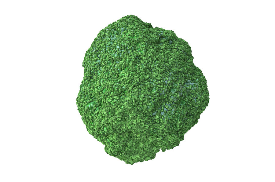 Broccoli High Poly PBR royalty-free 3d model - Preview no. 5
