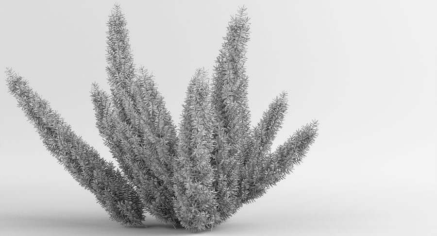 Asparagus Fern 01 royalty-free 3d model - Preview no. 11