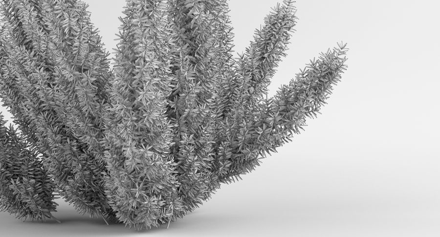 Asparagus Fern 01 royalty-free 3d model - Preview no. 12