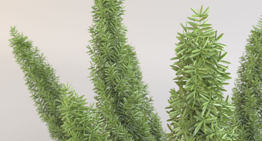 Asparagus Fern 01 royalty-free 3d model - Preview no. 9