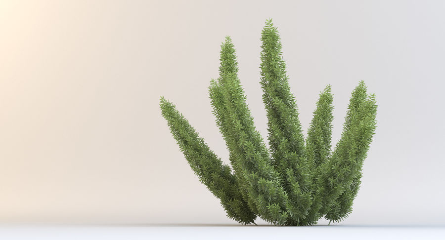 Asparagus Fern 01 royalty-free 3d model - Preview no. 7