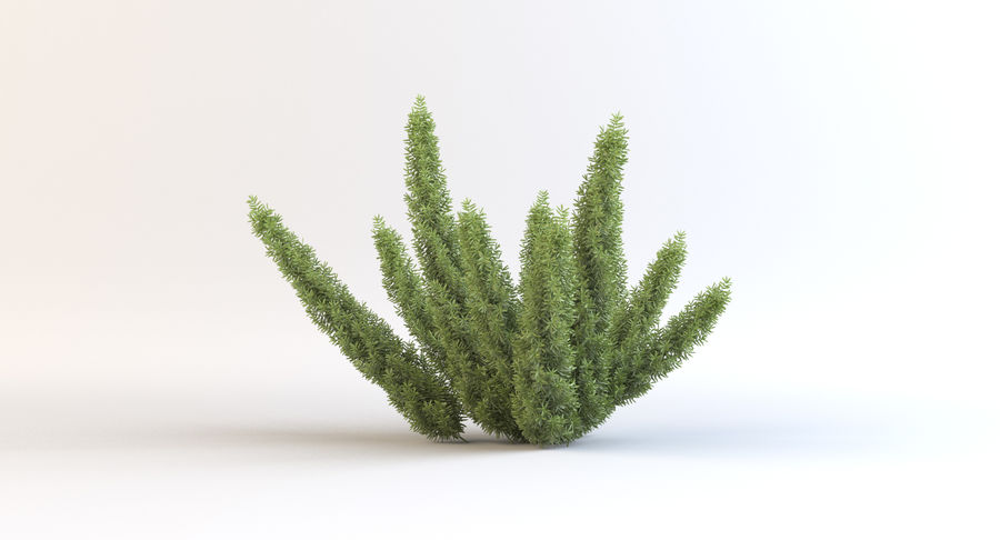 Asparagus Fern 01 royalty-free 3d model - Preview no. 3