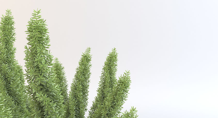 Asparagus Fern 01 royalty-free 3d model - Preview no. 6