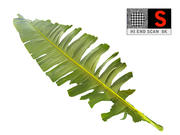 Tropical Leaf 3d model