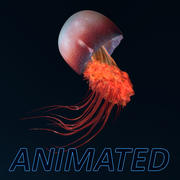 jellyfish ANIMATED model 3d model
