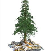 常緑樹 3d model
