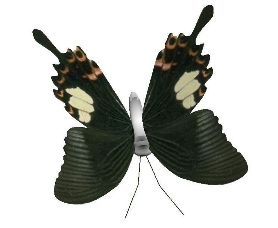 motyl royalty-free 3d model - Preview no. 2