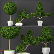 Roślina doniczkowa 15 3d model