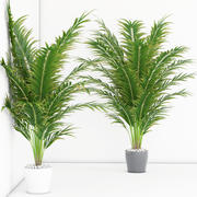 室内植物17 3d model