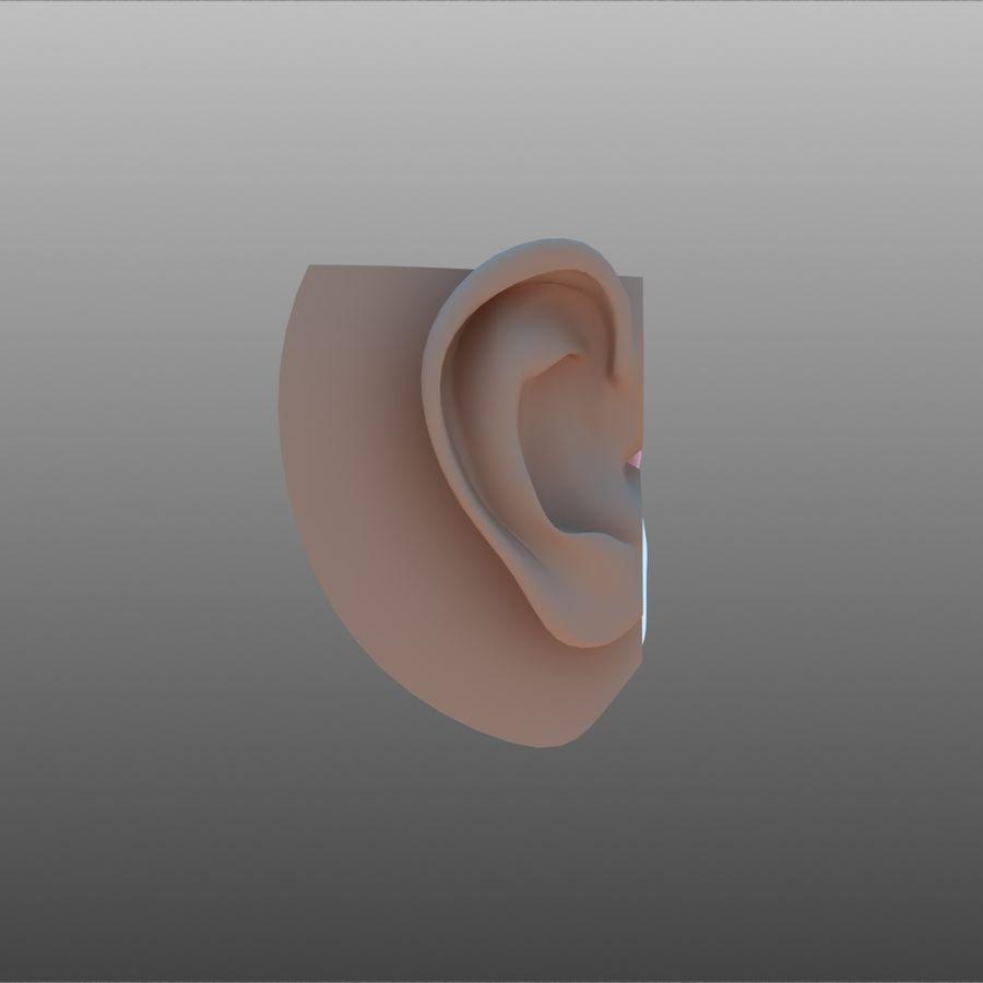 耳朵截面 royalty-free 3d model - Preview no. 4