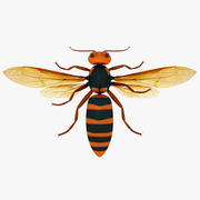 Asian Giant Hornet 3d model