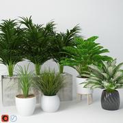 관엽 식물 11 3d model