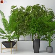 Houseplant 12 3d model