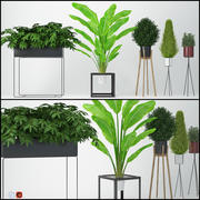室内植物13 3d model