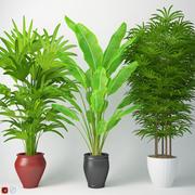 Houseplant 14 3d model
