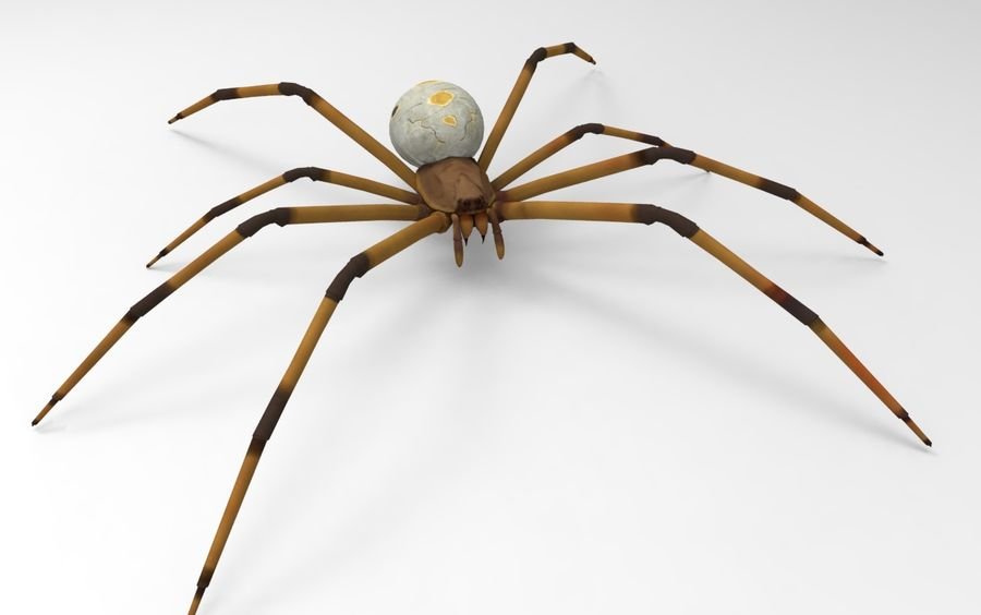 Brown Widow royalty-free 3d model - Preview no. 1