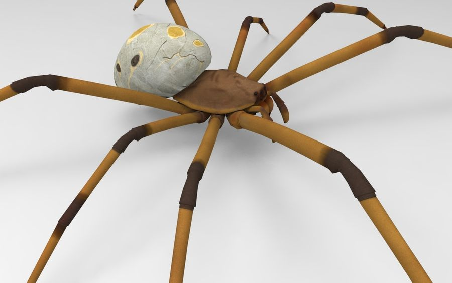Brown Widow royalty-free 3d model - Preview no. 2