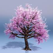 Cherry Blossom Tree 3d model