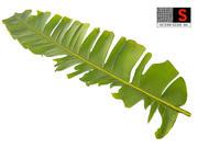 foglia di palma 3d model