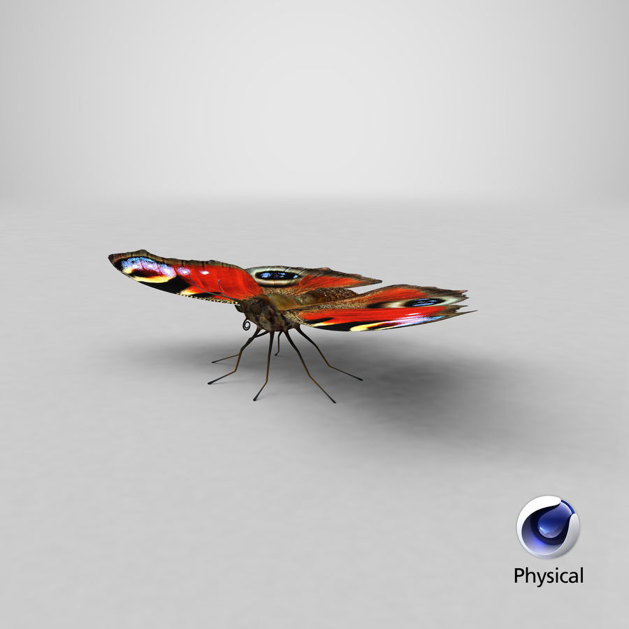 Peacock Butterfly royalty-free 3d model - Preview no. 34