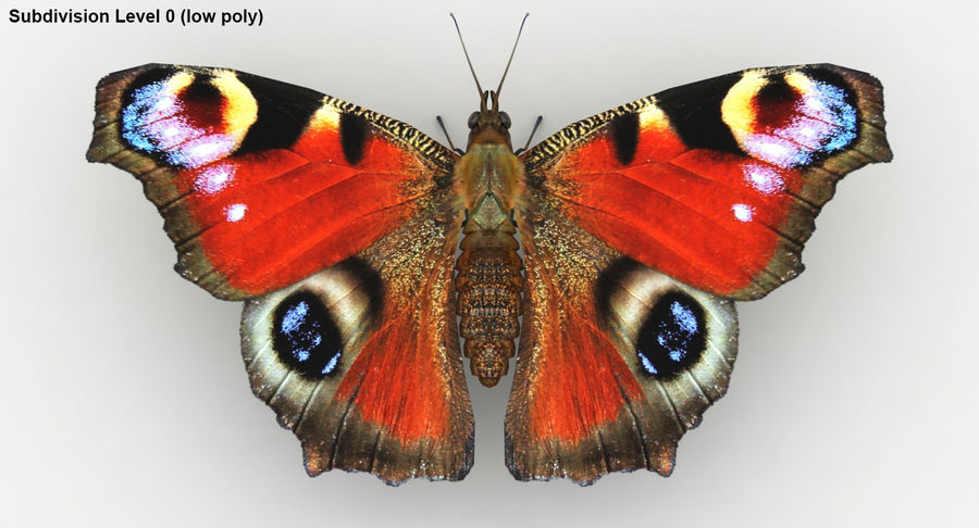 Peacock Butterfly royalty-free 3d model - Preview no. 23