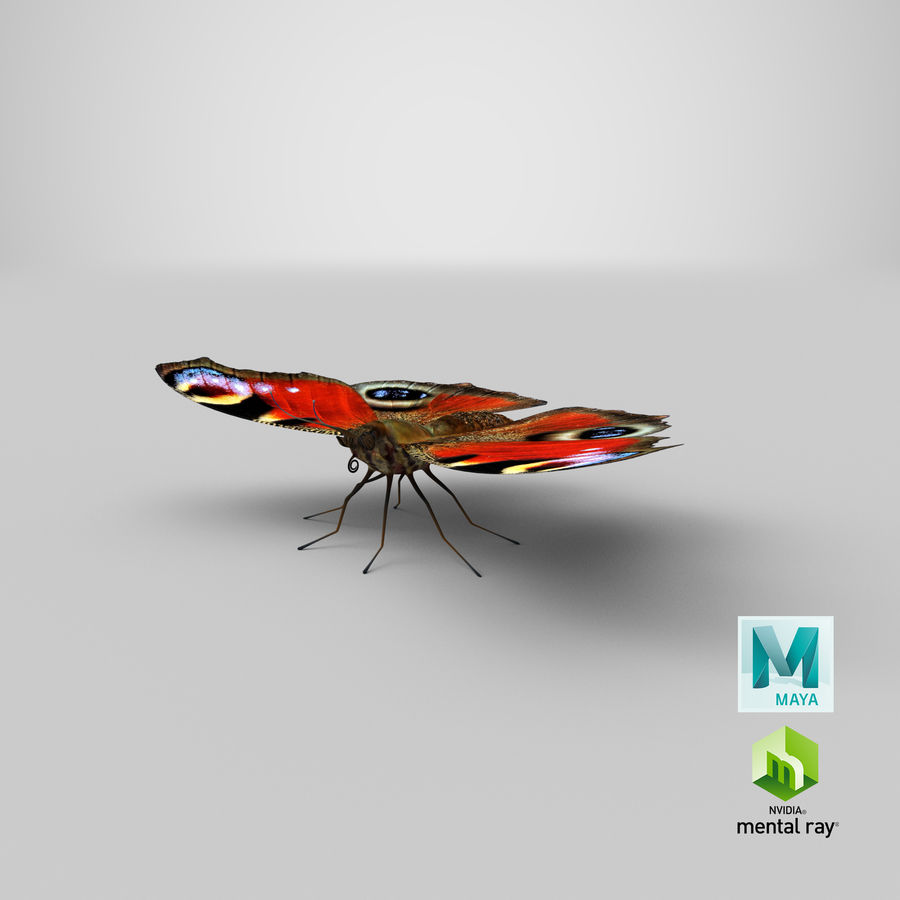 Peacock Butterfly royalty-free 3d model - Preview no. 31