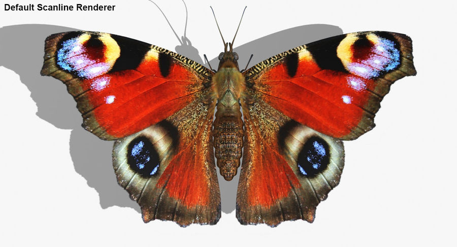 Peacock Butterfly royalty-free 3d model - Preview no. 26