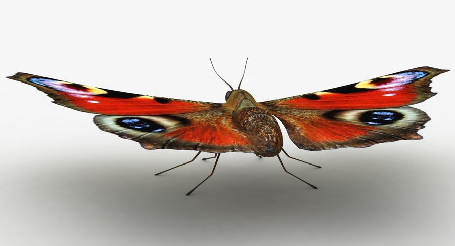 Peacock Butterfly royalty-free 3d model - Preview no. 10
