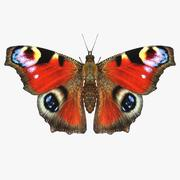 공작 나비 3d model