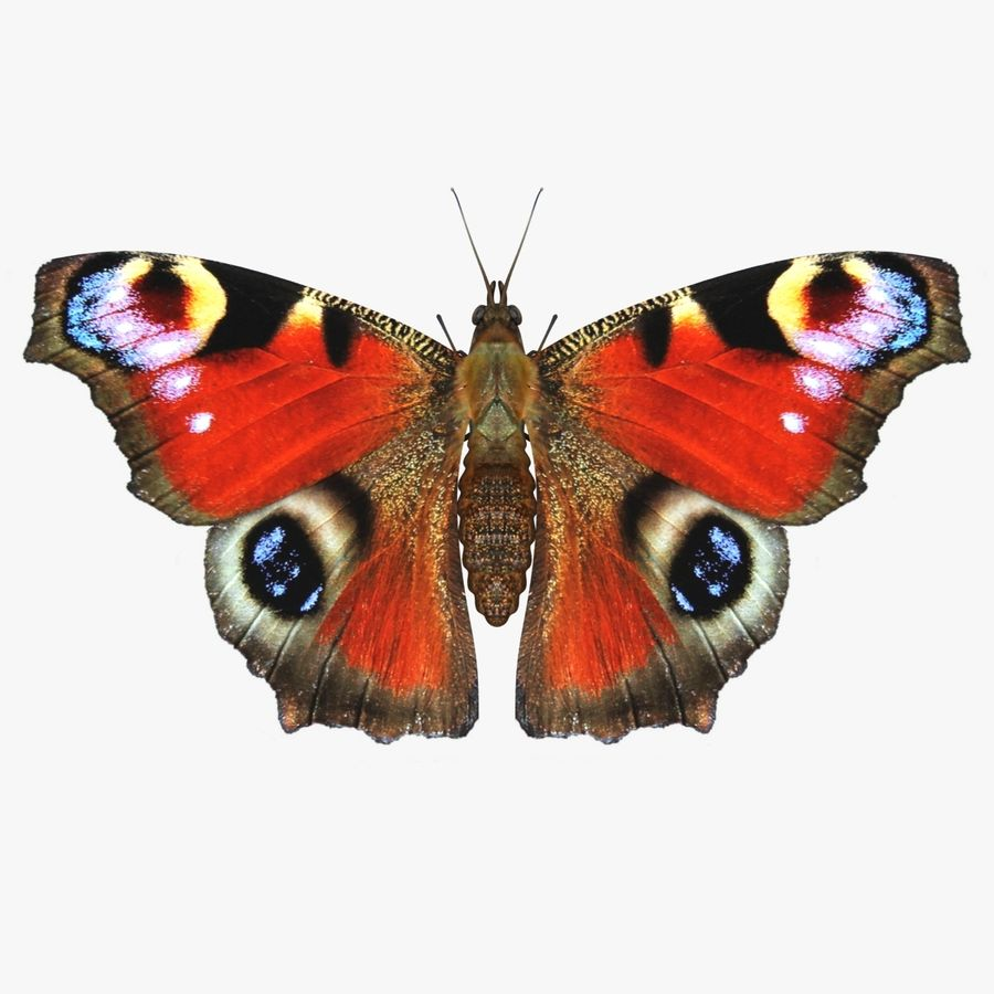 Peacock Butterfly royalty-free 3d model - Preview no. 1