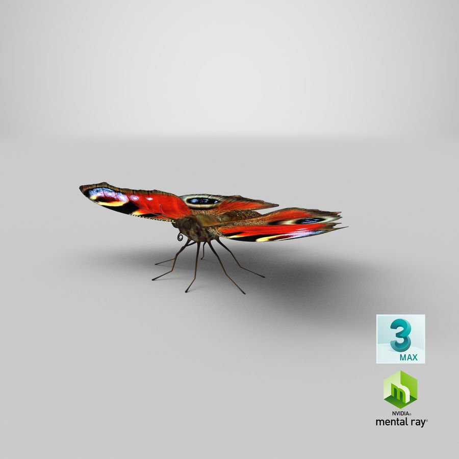 Peacock Butterfly royalty-free 3d model - Preview no. 33