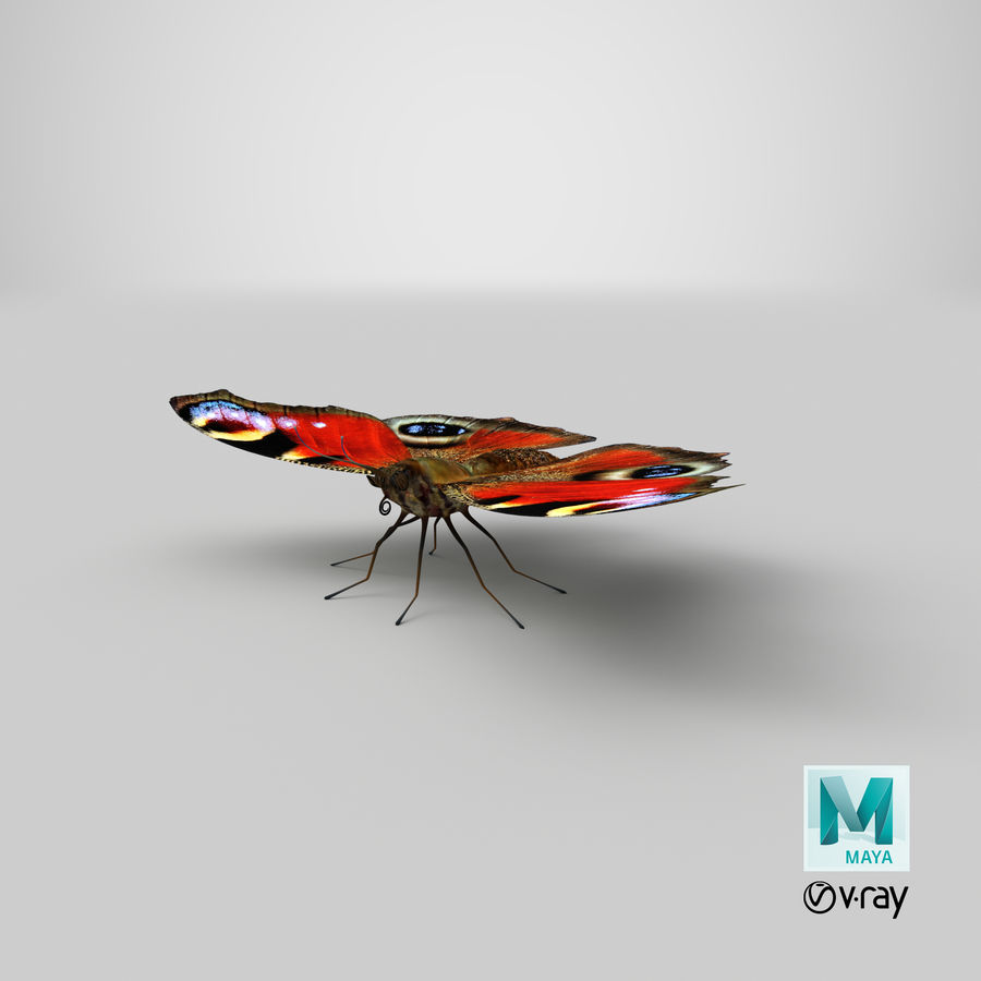 Peacock Butterfly royalty-free 3d model - Preview no. 30