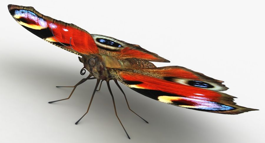 Peacock Butterfly royalty-free 3d model - Preview no. 4