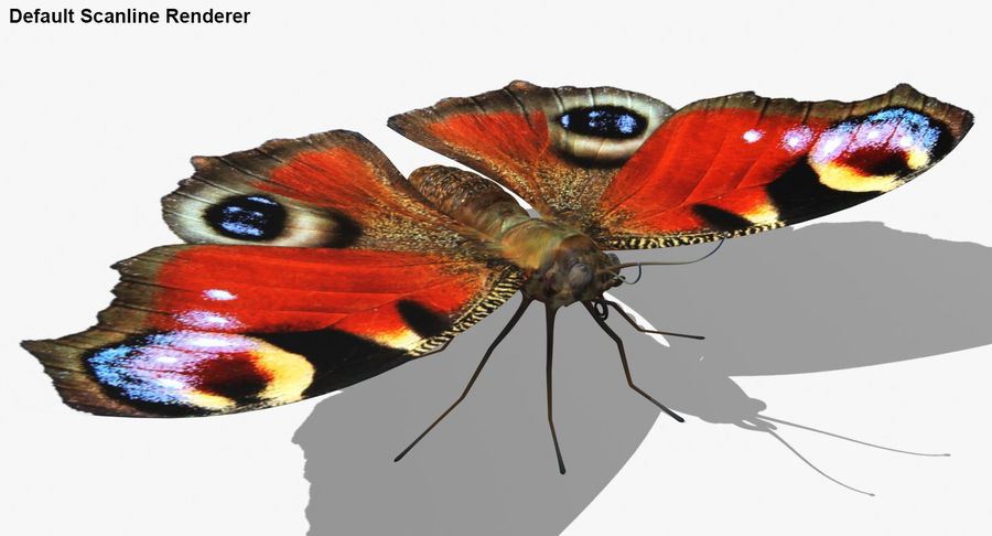 Peacock Butterfly royalty-free 3d model - Preview no. 27