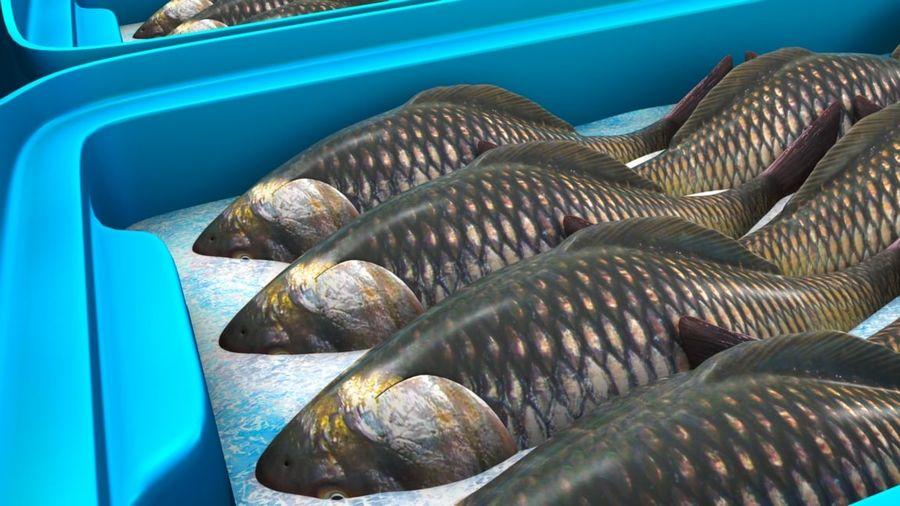 Fish Storage Box 3d Model 49 Unknown Ma Obj Free3d