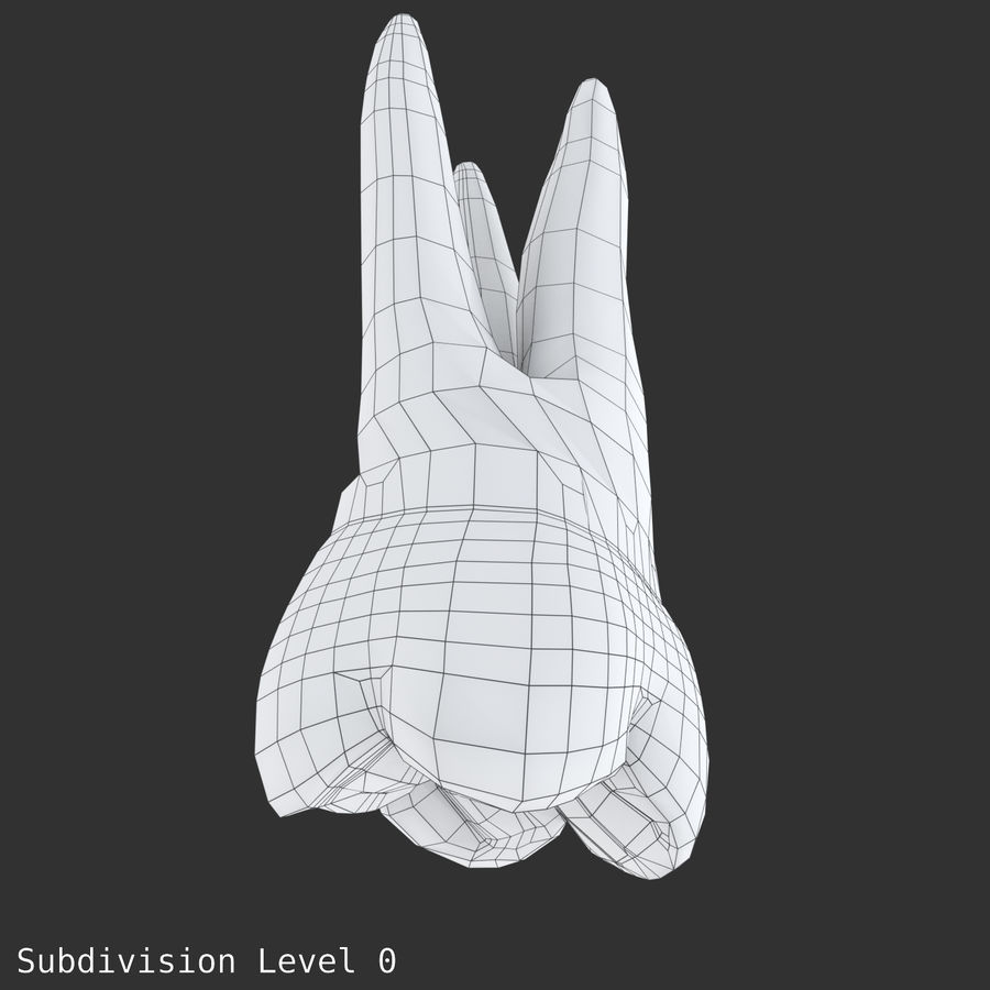 上顎第二大臼歯 royalty-free 3d model - Preview no. 19