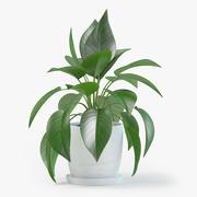 Jade Pothos Plant 3d model