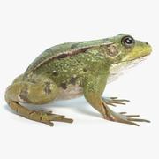 青蛙动画 3d model