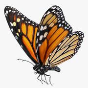 Pose de voar borboleta monarca com peles 3d model