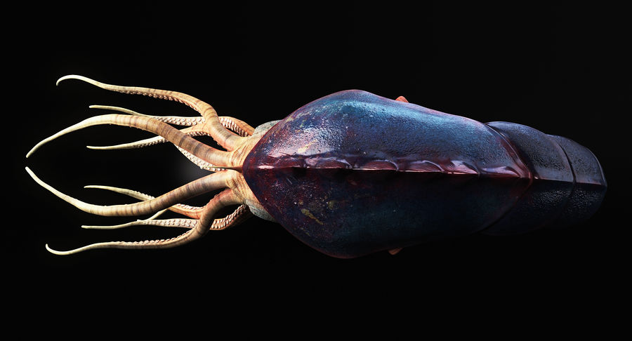 Squid Creature royalty-free 3d model - Preview no. 5