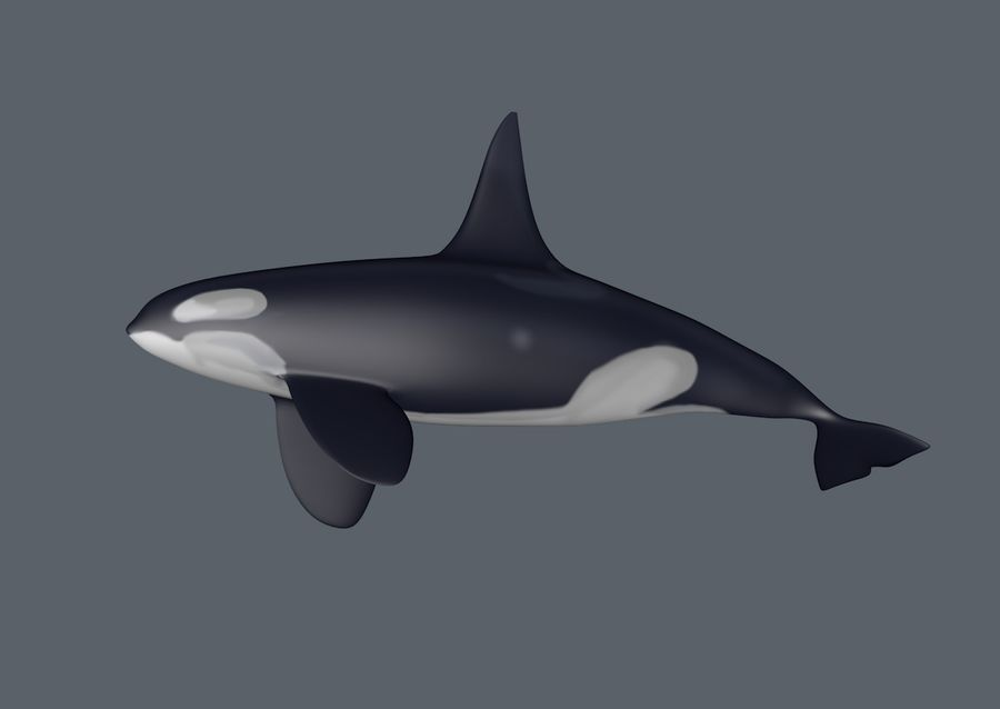 orka royalty-free 3d model - Preview no. 4