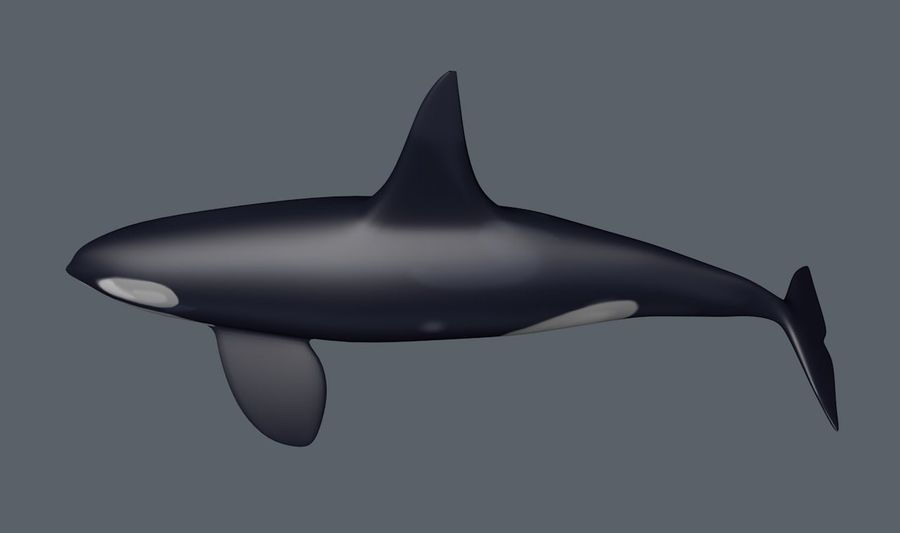 orka royalty-free 3d model - Preview no. 5