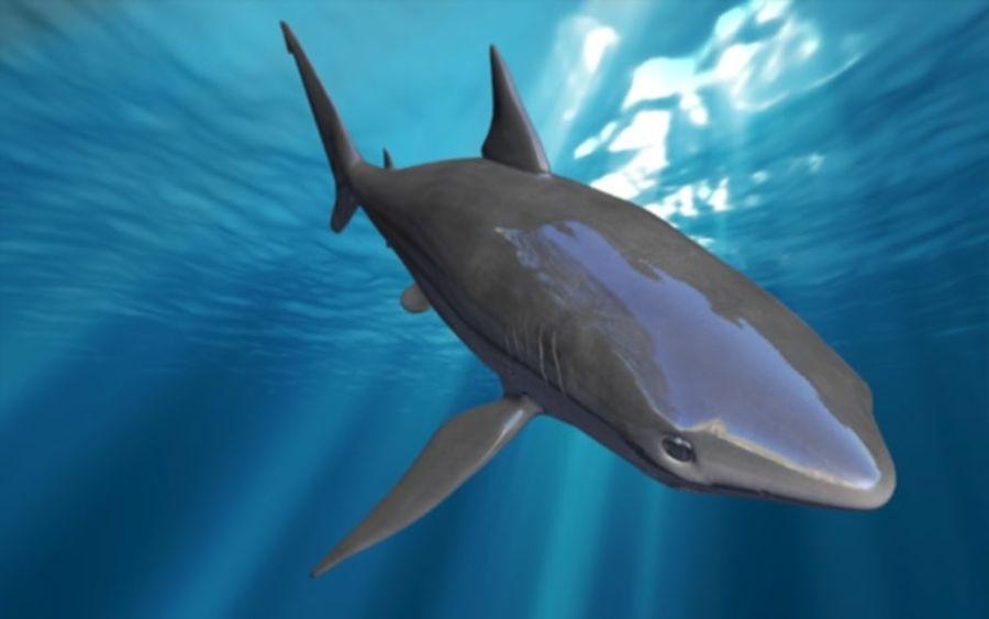 squalo truccato animato royalty-free 3d model - Preview no. 11