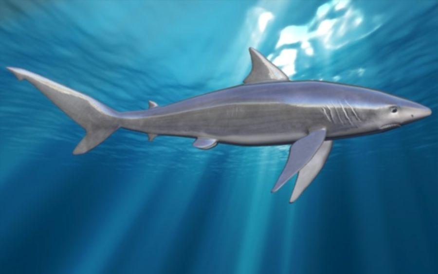 squalo truccato animato royalty-free 3d model - Preview no. 5